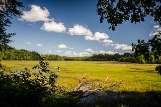 Dyar Pasture Wetlands