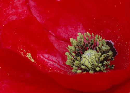 Rosso Assoluto