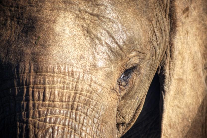 Elephant at Addo Elephant Park, South Africa.