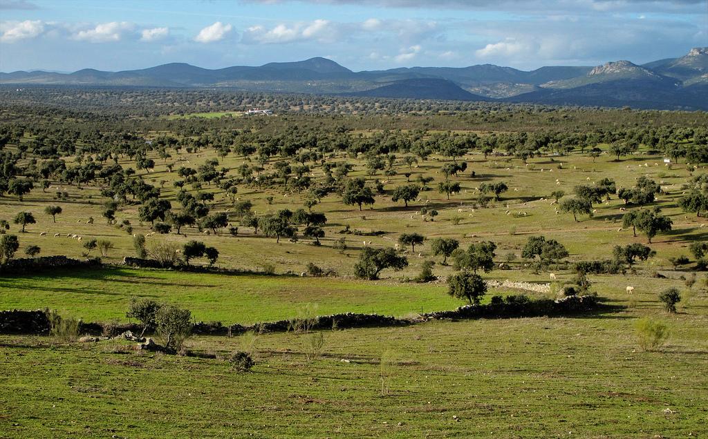 Paisaje adehesado, el final de la trashumancia hacia el sur. Autor, Miradas de Andalucía