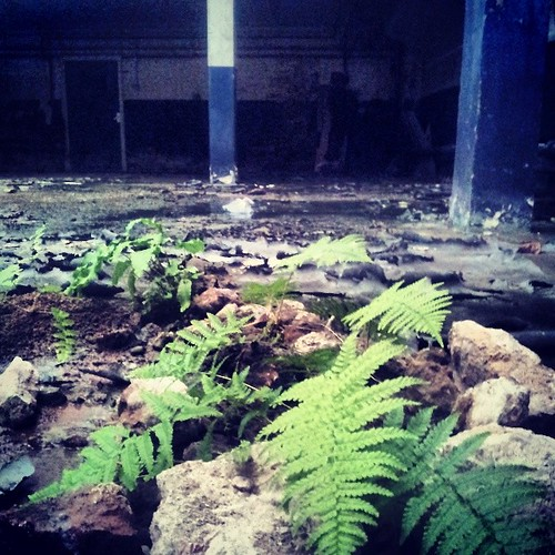 #Ferns find their way into a #DerelictBuilding