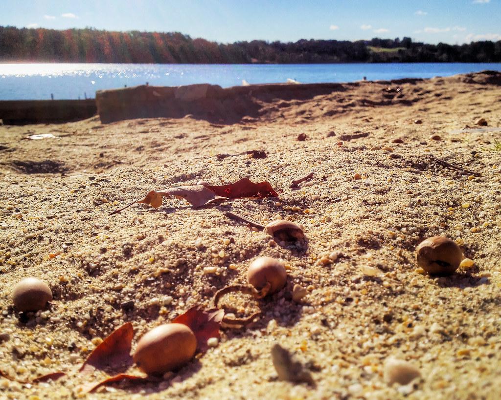 Little Acorns (Sand Fortress V)