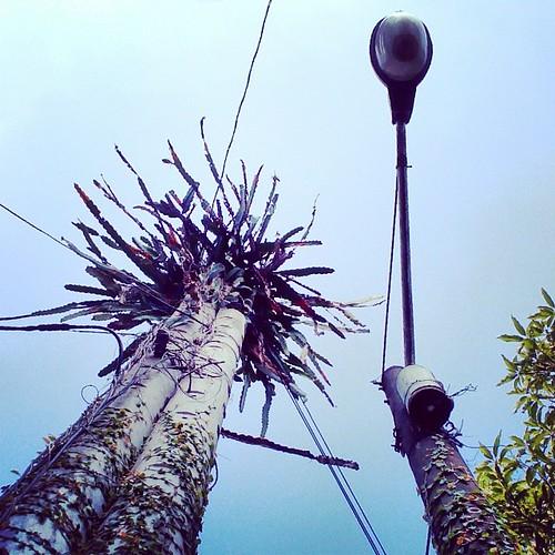 Looking up in Jhongsing Village. #taiwan #nantou