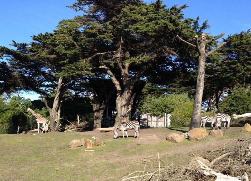 San Francisco Zoo (5)