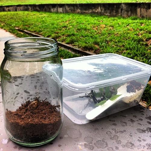 Project #terrarium rescue no. 2. Cantonment.