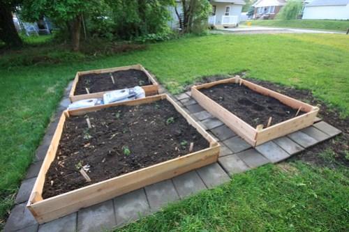 Gardening (May 2013) 006