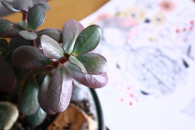 studio succulents