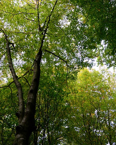 Trees by Alexandra Wirth