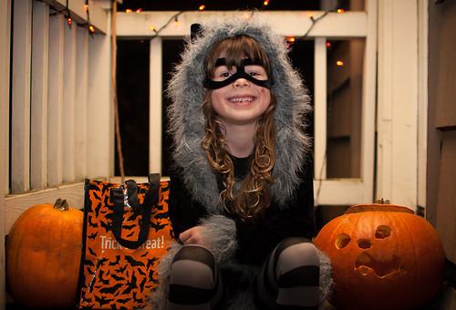 Raccoon and Pumpkins