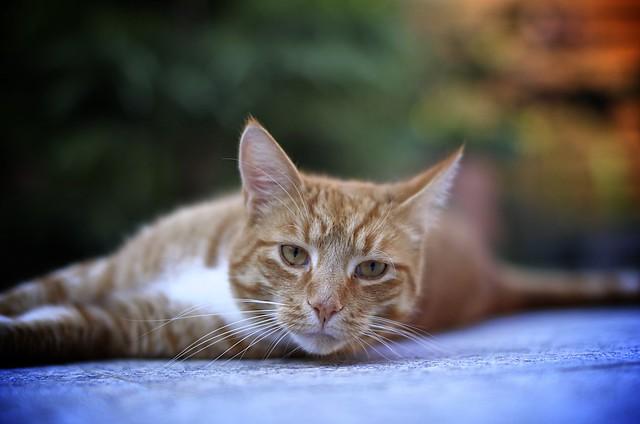 neighbor´s cat