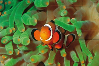 Ausflug: Palma Aquarium