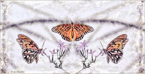 Monarch Butterflies using Symmetry PSD file