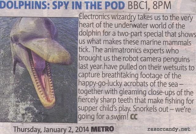 dolphins - spy in the pod 1