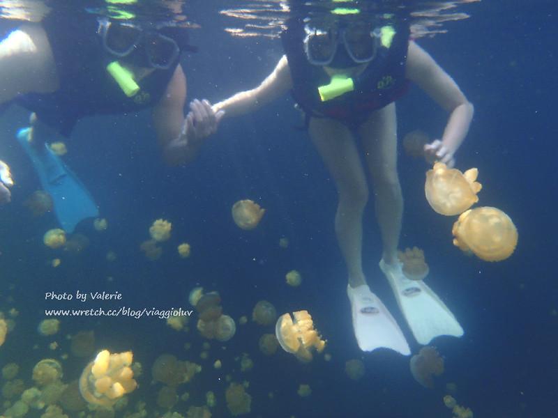 jellyfish lake,palau,帛琉,帛琉景點,帛琉浮淺,水母湖,浮潛 @薇樂莉 Love Viaggio | 旅行.生活.攝影