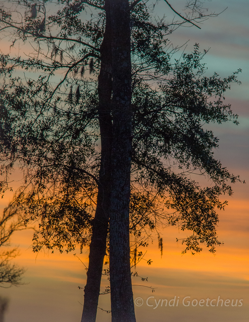sunset treehuggers