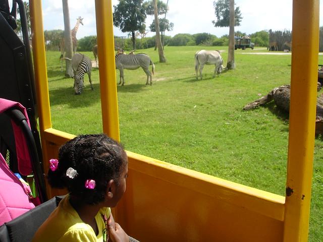 Riding the train at Busch Gardens