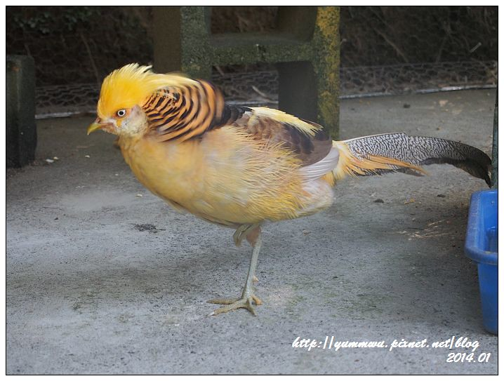【新竹】森林鳥花園--親子休閒旅遊新景點 @ 。♥。~橘子寶貝的幸福方程式~。♥。 :: 痞客邦