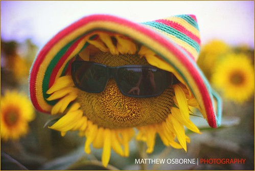Summer Lovin' Sunflower by MatthewOsbornePhotography_