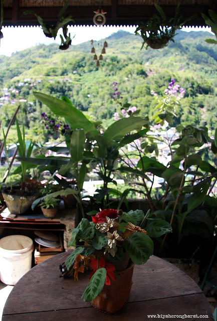 Sanafe Lodge & Restaurant in Banaue Ifugao