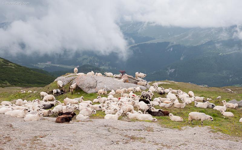 turma de oi in Bucegi