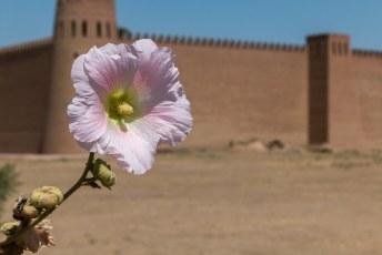 Wat ook oud was, was het oud roze van deze bloem.