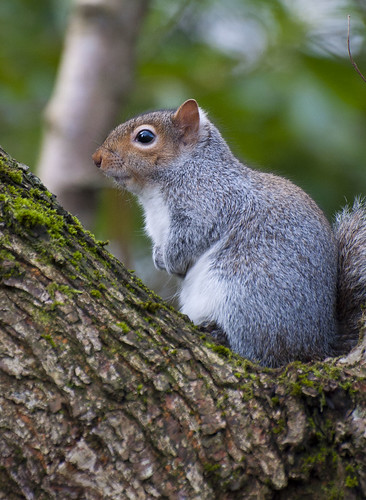 Squirrel by jonny.andrews65