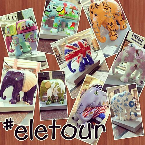 Here we go lots of #elephants. #eletour #elephantparade