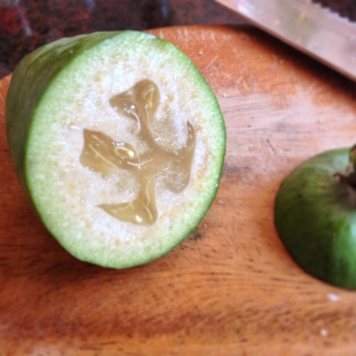 Feijoa from J&A's yard