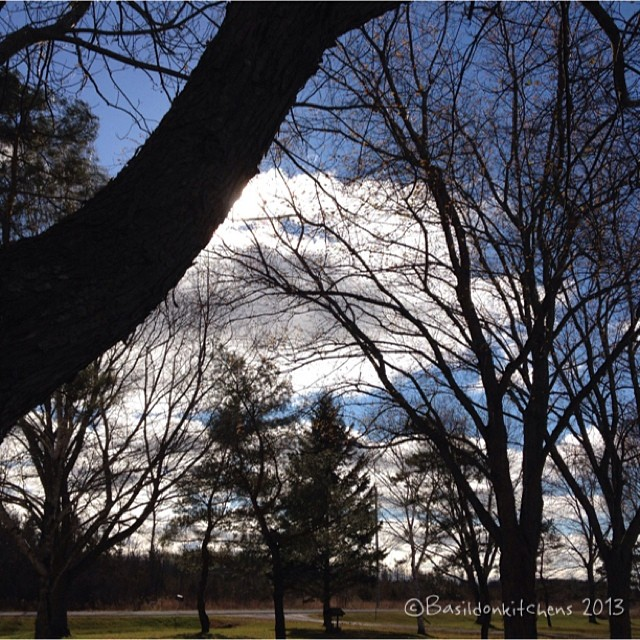 Nov 12 - clouds {these clouds are scurrying across the brisk sky today!} #fmsphotoaday #clouds #sunshine #sky