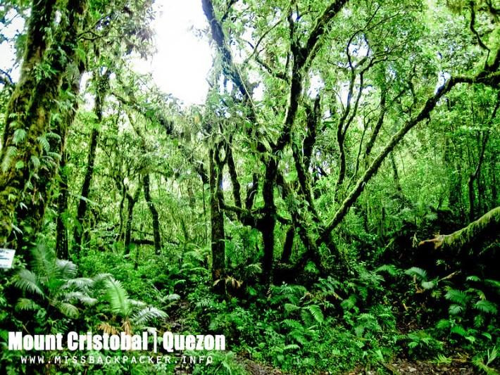 Mount Cristobal
