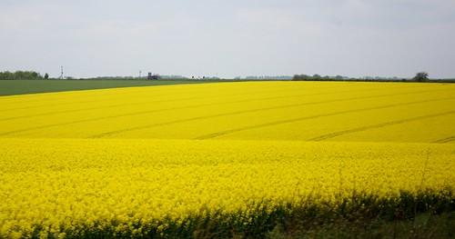 Stonehenge Yellow fields