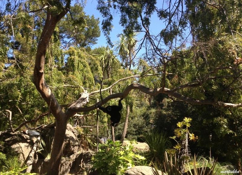 Oakland Zoo (4)