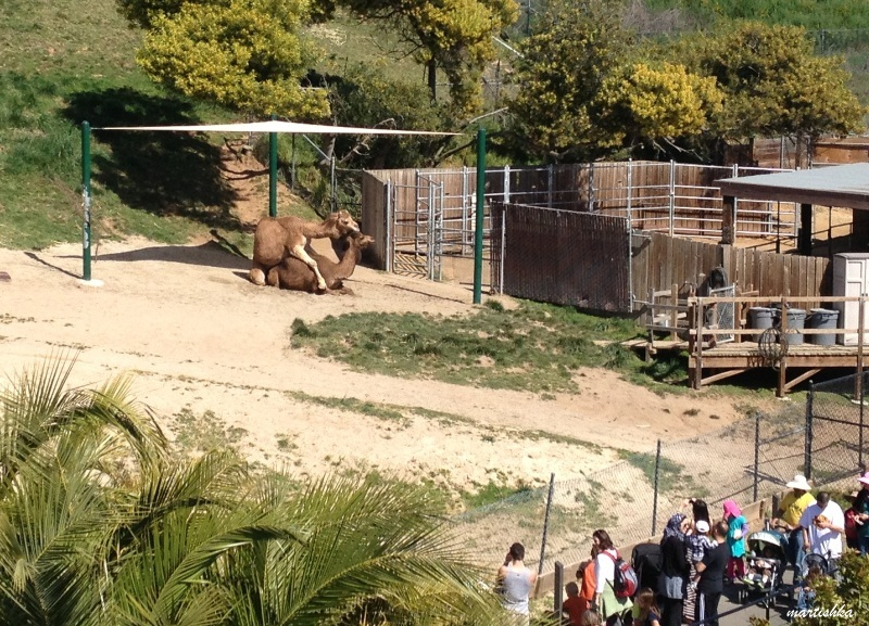 Oakland Zoo (39)