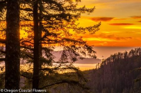 Oregon Coast Tillamook Bay