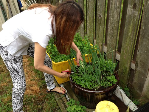 Herb garden and cutting green onions