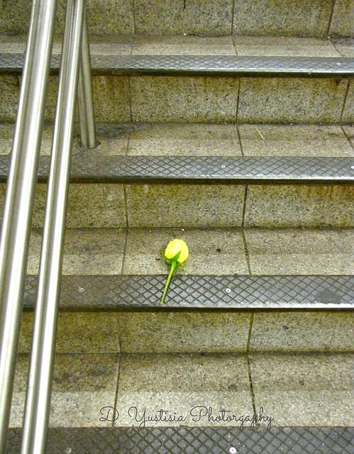 Abandoned Rose