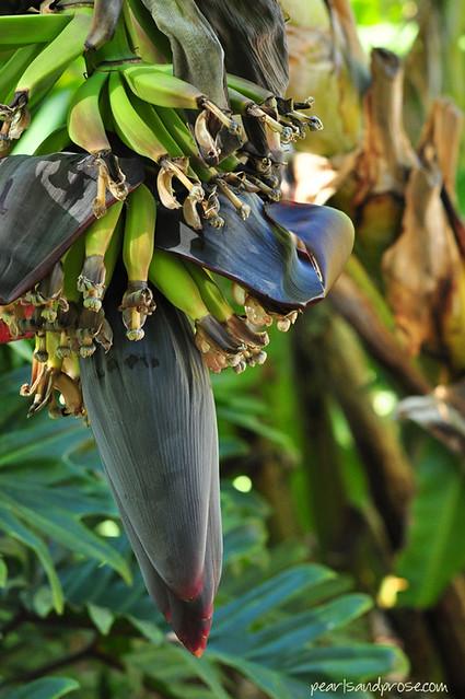 quail_bananas_web