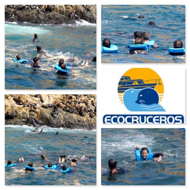 Nadar con lobos marinos en Perú
