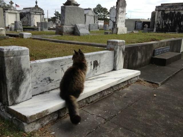 1_gato-diarioecologia.jpg
