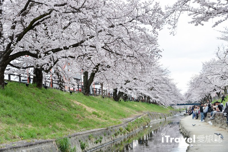 《奈良赏樱景点》高田川千本樱:大和高田市水岸樱花隧道间,享受野餐赏樱与好友相聚乐趣