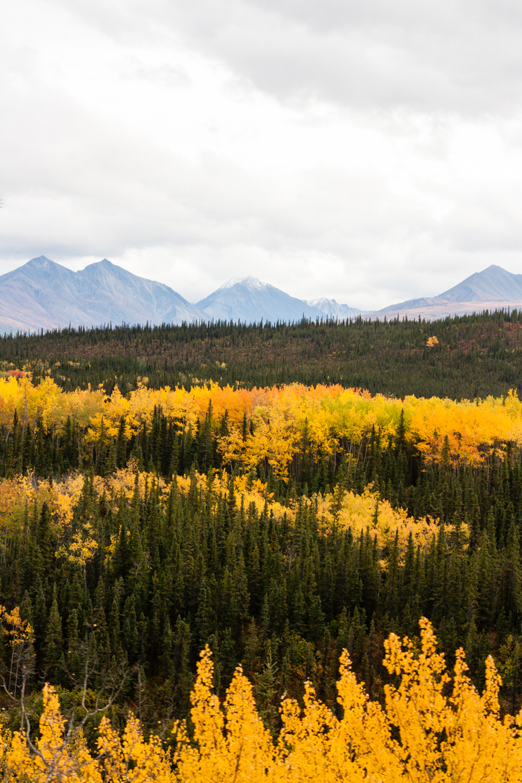 autumn in denali national park landscape