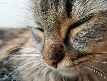 Nanouk fait la sieste