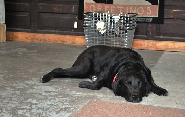 When Visiting Black Dog Salvage in Roanoke, Va., Look for Sally. Woof!