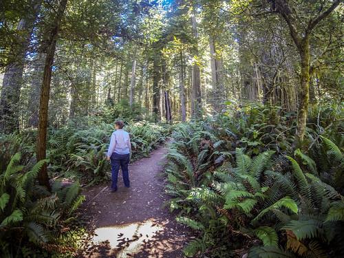 Redwoods and Elk-048