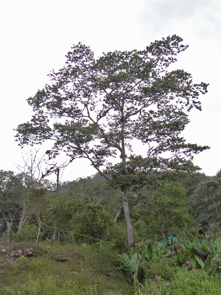La Cordillera Nacional Central Puerto Parque El El Map Yunque Rico