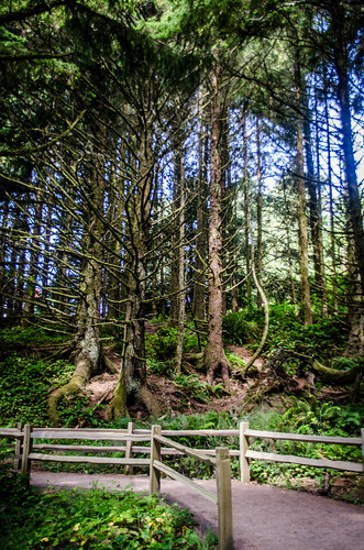 Trees at Heceta Head Trail