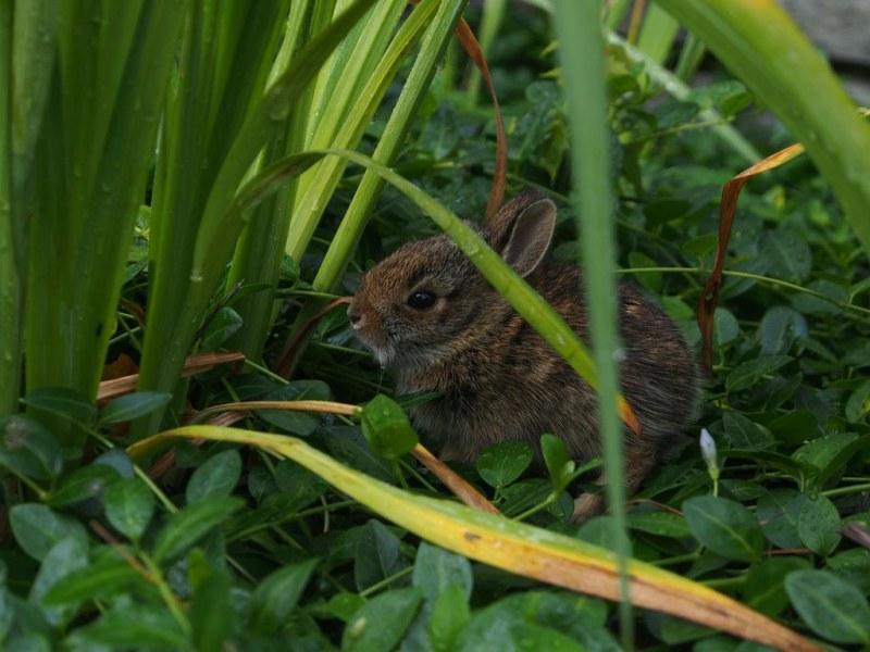 Fierce Bunny In The Garden