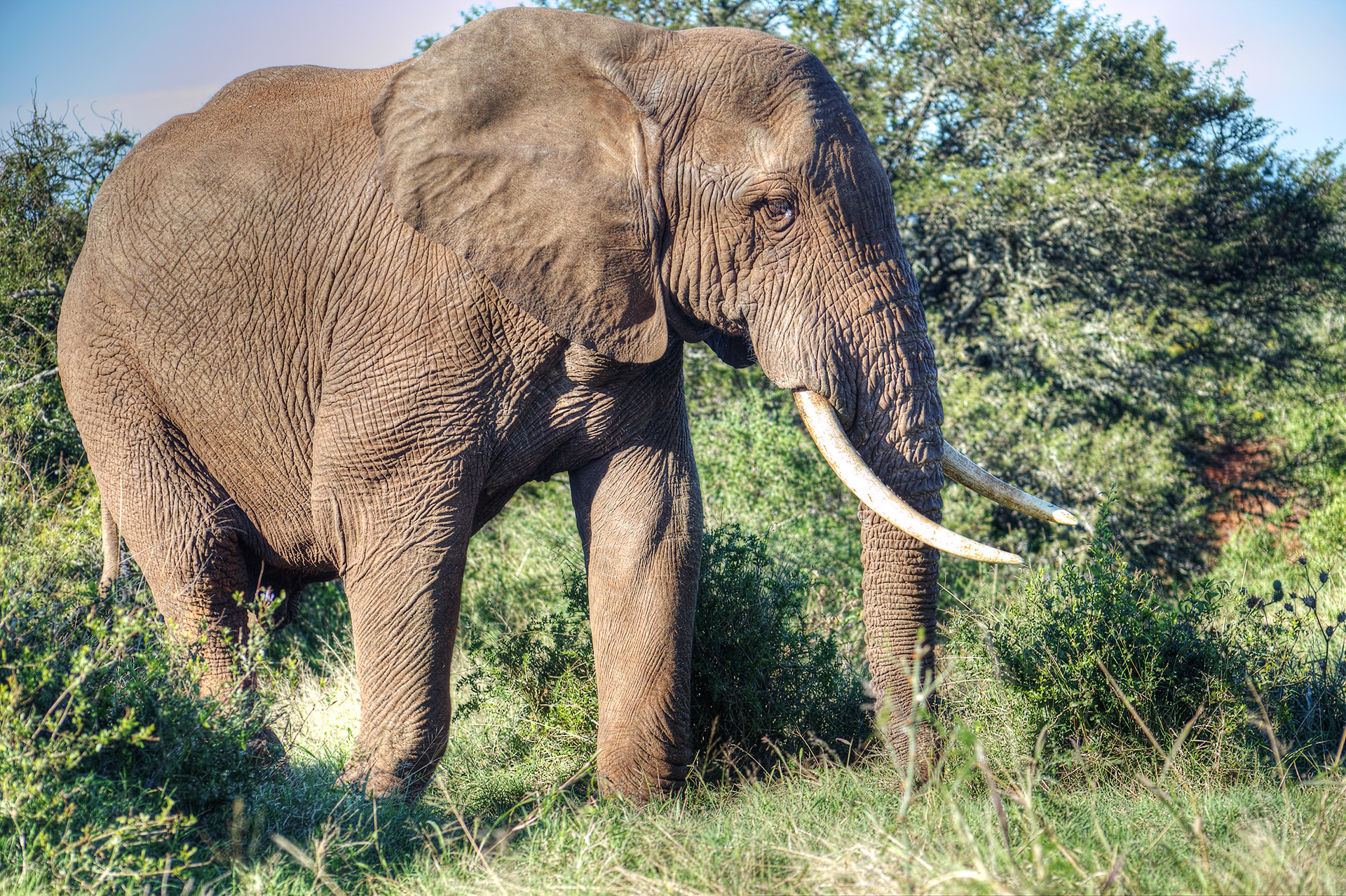 A majestic elephant.