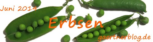 Garten-Koch-Event Juni: Erbsen [30.06.2014]