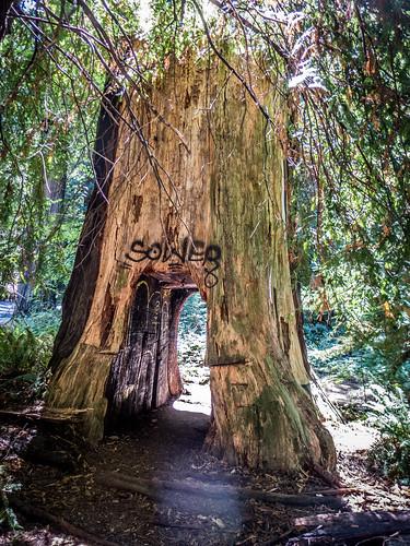 Coastal Redwoods and Fog-053